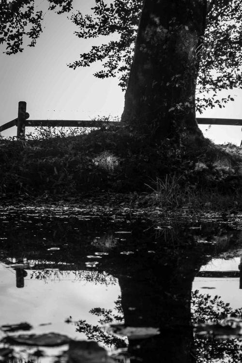 Reflectie in de Hoge Venen26