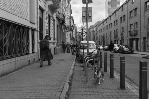 20150304_Brussel__MG_6413