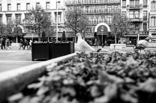 20151120_Brussel__MG_7095