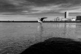 20170806_Oostende__MG_1745